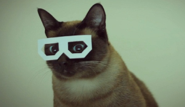 The Cat Video Film Festival