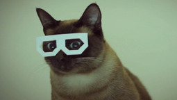 The Cat Video Film Festival Is Here