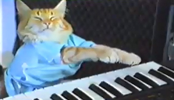 Key Board Cat AAW