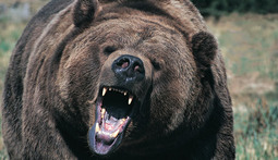 The 10 Most Insane Man vs. Bear Showdowns