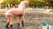 Wildboyz - Llama
