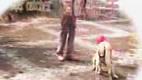 Japanese Dog Poop Solution