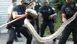 15 Craziest Cops Moments Ever: Incidents 15-11