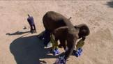 Elephant Stampede Test