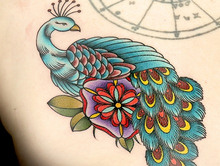 Elimination Tattoo: Peacocks